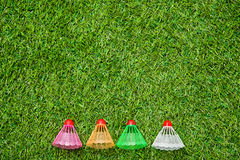Badminton shutlecocks lying on green grass Royalty Free Stock Photo