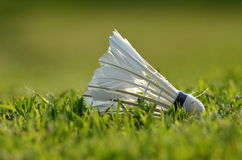 Badminton shuttlecock on the green lawn Stock Image
