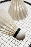 Badminton shuttlecocks on the racket Stock Photo