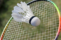 Badminton shuttlecocks on racket Stock Photography