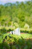 badmintongyckel Arkivfoto