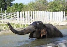 Badningelefant-man Royaltyfria Foton