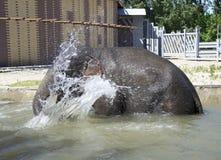 Badningelefant-man Royaltyfri Fotografi