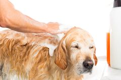 Badrum till en hund Fotografering för Bildbyråer