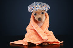 badrumhund royaltyfria foton