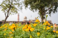 Badshahi清真寺,拉合尔,旁遮普邦,巴基斯坦看法  图库摄影
