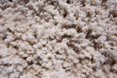Badwater Basin Death Valley salt textures macro Royalty Free Stock Photos