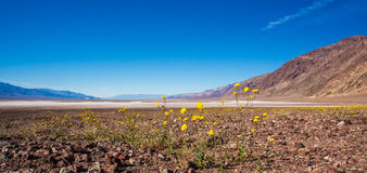 Badwater Basin Royalty Free Stock Photography