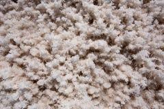 Badwater doliny soli Basenowe Śmiertelne tekstury makro- Zdjęcia Royalty Free