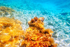 Baearic islands underwater sea bottom Stock Photography