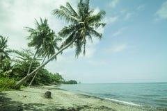baech椰子树 库存照片