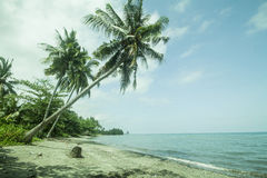 Baech coconut tree. Coconut tree along the seaside forming beautiful seaside landscape stock photo