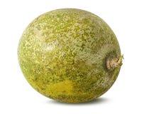 Bael-Frucht- oder hölzerne Apfelfrucht Aegle-marmelos auf einem Weiß Stockfoto
