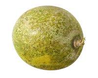 Bael-Frucht- oder hölzerne Apfelfrucht Aegle-marmelos auf einem Weiß Stockfotos