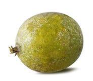 Bael-Frucht- oder hölzerne Apfelfrucht Aegle-marmelos auf einem Weiß Stockfotografie