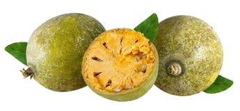 Bael-Frucht- oder hölzerne Apfelfrucht Aegle-marmelos auf einem Weiß Lizenzfreie Stockbilder