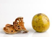 Bael (marmelos de Aegle) Fotografía de archivo