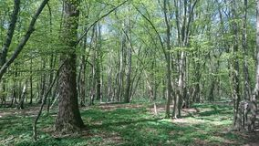 Baeume de voller de Der Wald Images stock