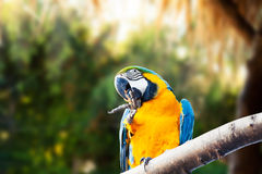 Baeutiful parrot possed in a tree branch. Royalty Free Stock Images