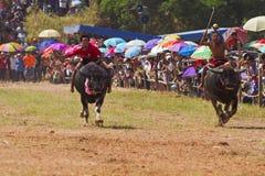 Baffalo racing festival Stock Photography