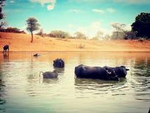 Bafflow двигая вокруг и в воду в пустыне Стоковые Фотографии RF