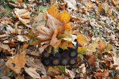 Bag with autumn leaves. Wooden bag with autumn maple leaves royalty free stock images