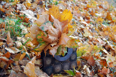 Bag with autumn leaves. Wooden bag with autumn maple leaves Stock Photos