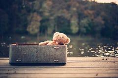 bag bear teddy стоковые фото