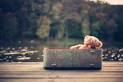 bag bear teddy 免版税库存图片