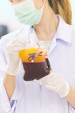 Bag of Blood in hand asian Doctor Stock Photo