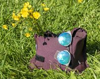 Bag with a bouquet of flowers and sunglasses stands on the grass close-up royalty free stock photos