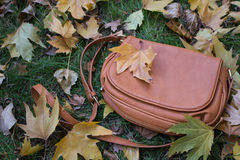 Bag. Brown ladies bag on the grass surrounding the colorful leaves royalty free stock photo