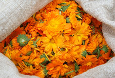 A bag with calendula. A bag with medicinal orange calendula Royalty Free Stock Image