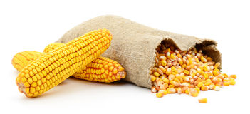 Bag of corn kernels. Bag of corn kernels against white background stock photos