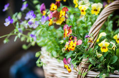 The bag with flowers Royalty Free Stock Images