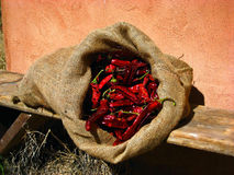 A bag full of chillis Royalty Free Stock Photography