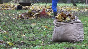 Bag full of leaves and blurred gardener worker rake colorful foliage. 4K stock footage