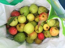 Apples harvest in autumn season. Bag full of red and green fruit Stock Images