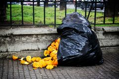 A bag of garbage. With orange stock photos