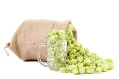 Bag and glass with green hop cones. Royalty Free Stock Image