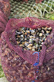 Bag with goose barnacle Stock Photos