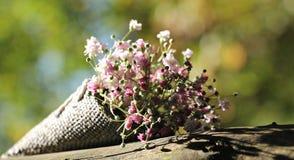 Bag Gypsofilia Seeds, Gypsophila Stock Photo