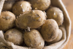 Bag Of Jersey Royal Potatoes royalty free stock photo