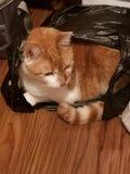 bag katten arkivfoto