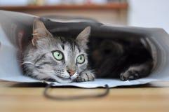 bag katten Royaltyfri Foto