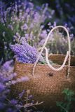 Bag with lavender in a lavender field Royalty Free Stock Photo