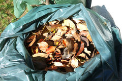Bag of Leaves Stock Photos