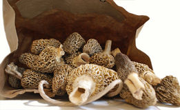Bag of Morels royalty free stock photo