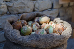 A bag of onions. On the background of a stone wall stock image