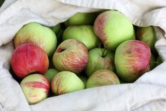 Bag of Red-Green Apples in summer Royalty Free Stock Photography